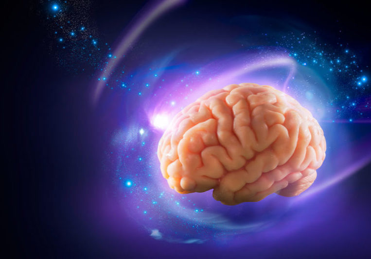 44405723 - human brain floating on a purple background